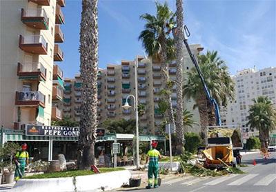 Almunecar Palmbomen snoeien