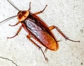 kakkerlakjpg